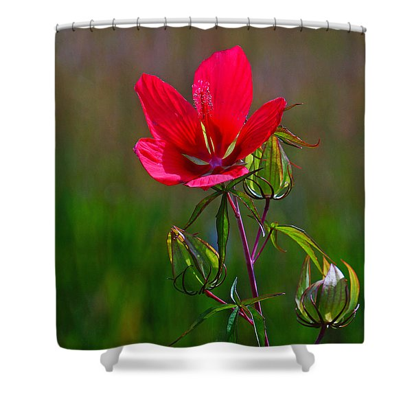Texas Star Hibiscus Shower Curtain
