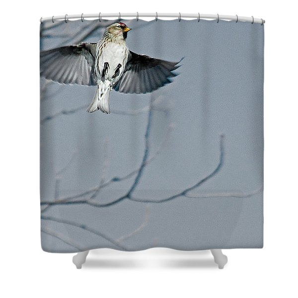 The Arctic Redpoll In-flight Shower Curtain