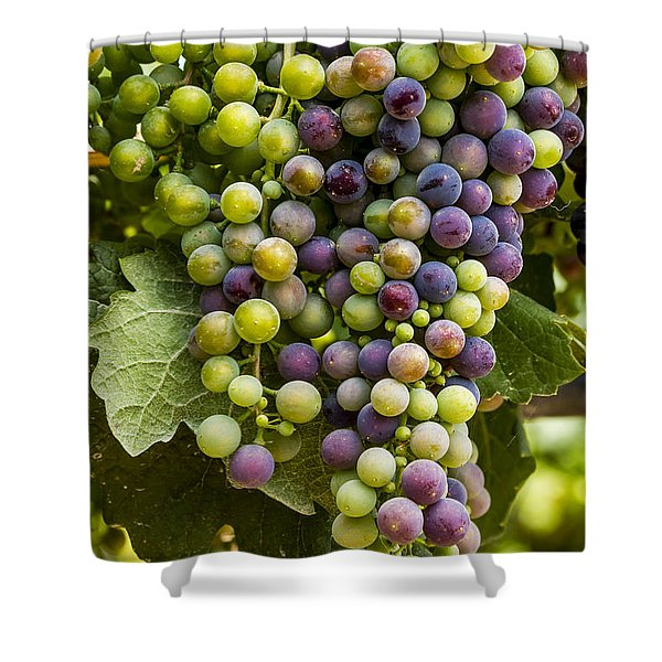 The Art Of Wine Grapes Shower Curtain