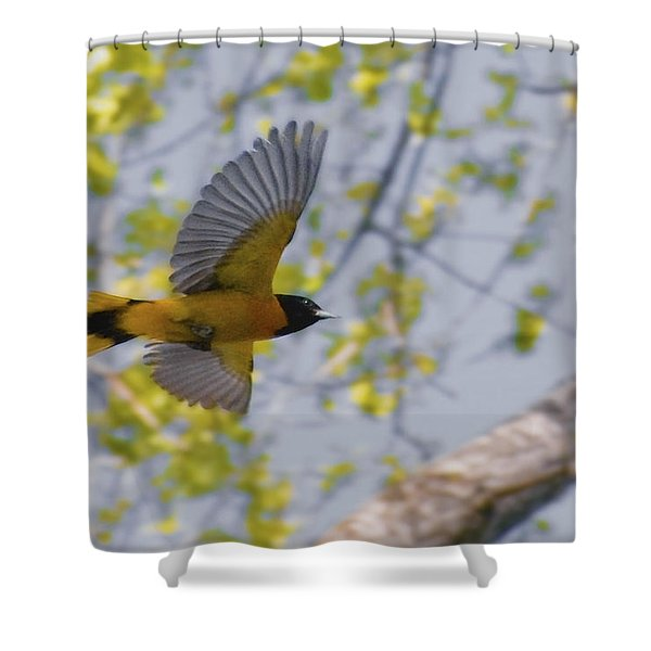 The Baltimore Oriole In-flight Shower Curtain