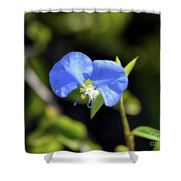 The Beauty Of Dayflowers Shower Curtain