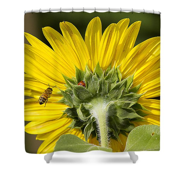 The Bee Lady Bug And Sunflower Shower Curtain