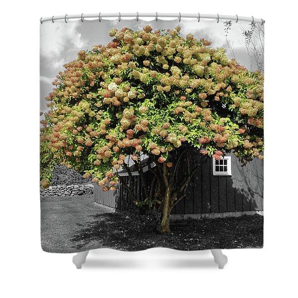 The Big Hydrangea Tree Shower Curtain