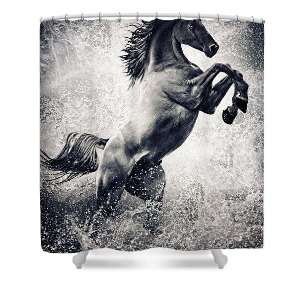 The Black Stallion Arabian Horse Reared Up Shower Curtain