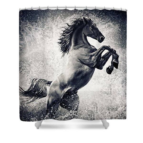 The Black Stallion Arabian Horse Reared Up Shower Curtain