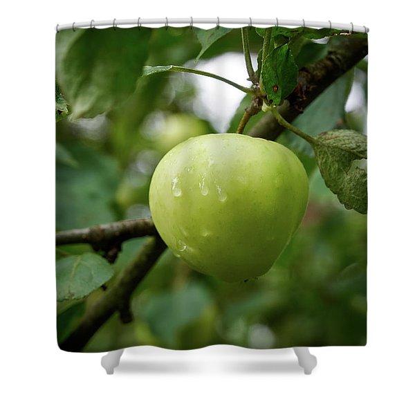 The Blond Apple Shower Curtain