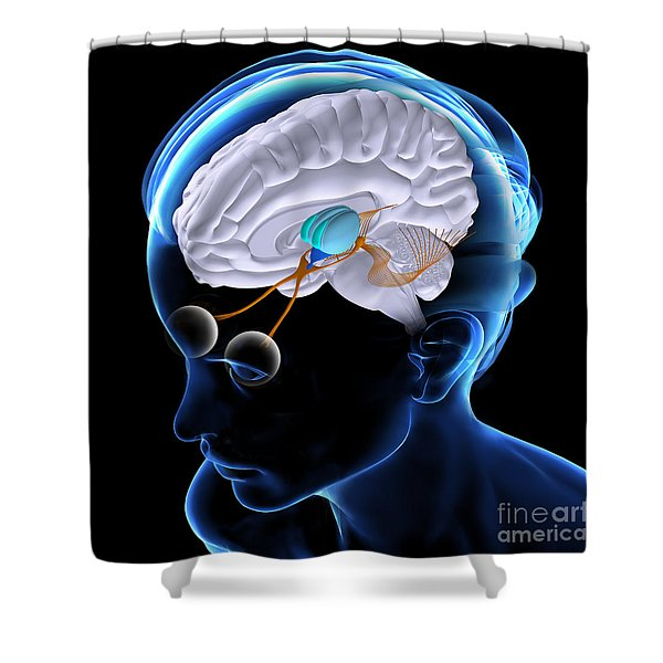 The Brain And Sight Shower Curtain