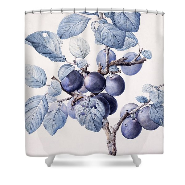 The Branch Of A Plum Tree Shower Curtain