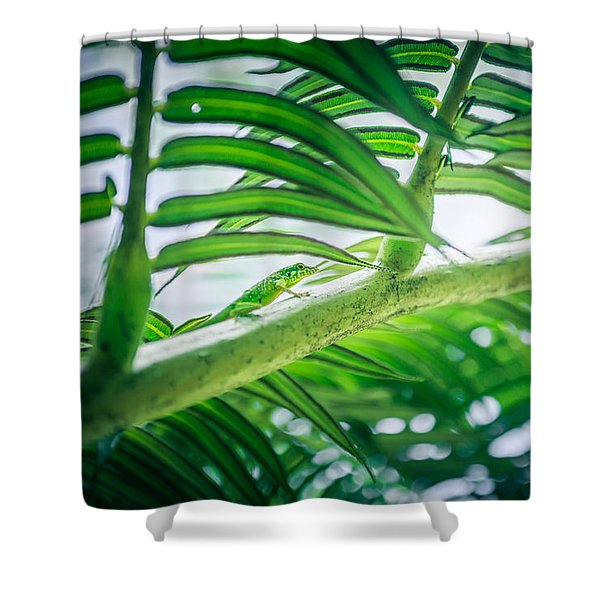 The Camouflaged Shower Curtain