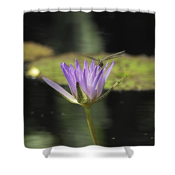 The Dragonfly And The Lily Shower Curtain