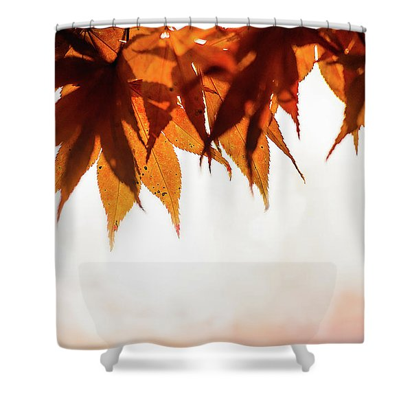 The Eaves Of Season Shower Curtain