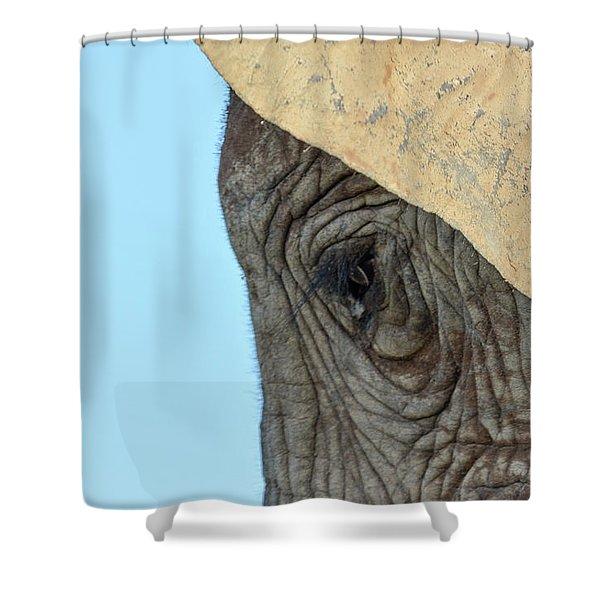 The Eye Of An Elephant Shower Curtain
