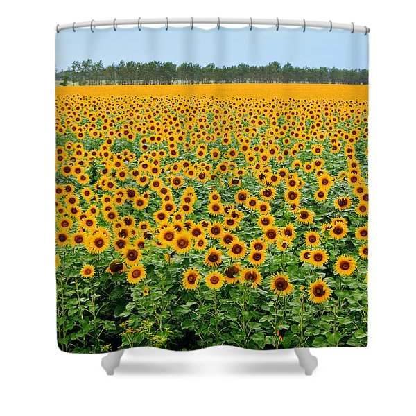The Field Of Suns Shower Curtain