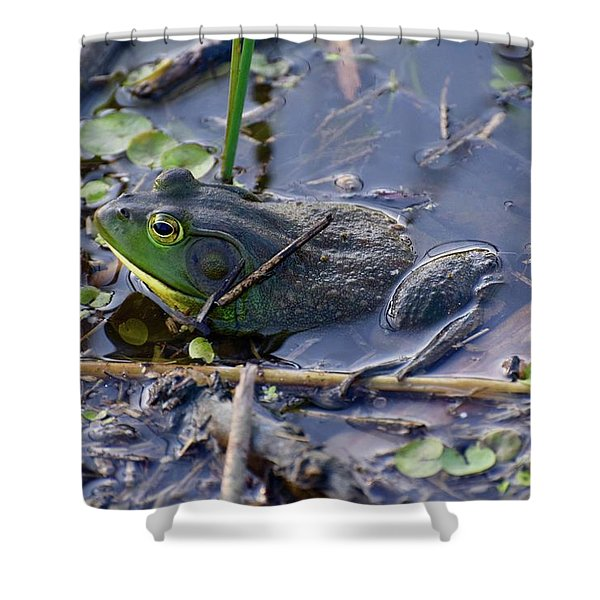 The Frog Remains Shower Curtain
