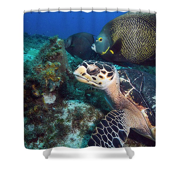 The Green Turtle And The Angelfish Shower Curtain