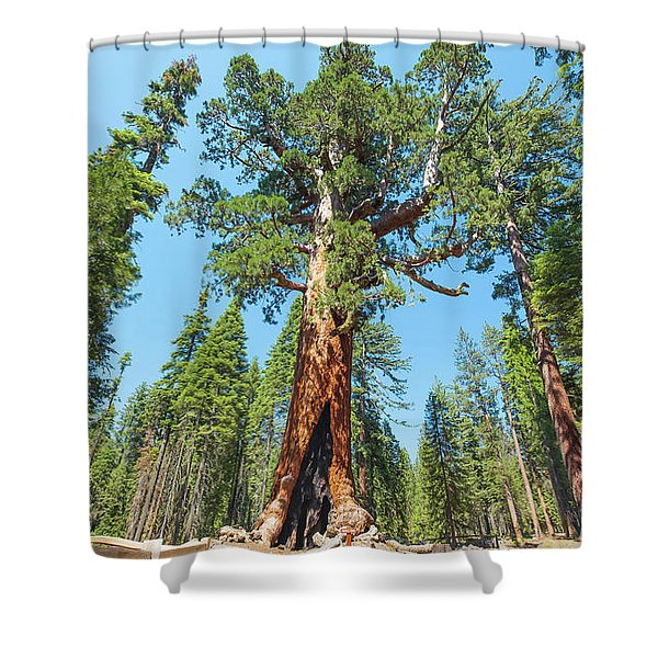 The Grizzly Giant- Shower Curtain