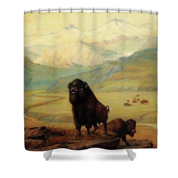 The Herd Bull Shower Curtain