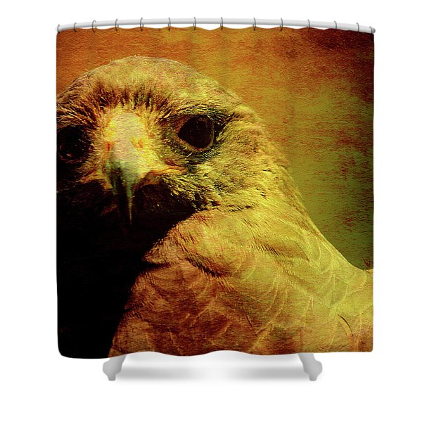 The Hunter . Portrait Of A Hawk . Square . 40d7877 Shower Curtain by Wingsdomain Art and Photography