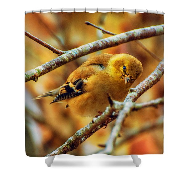 The Inquisitive Goldfinch Shower Curtain