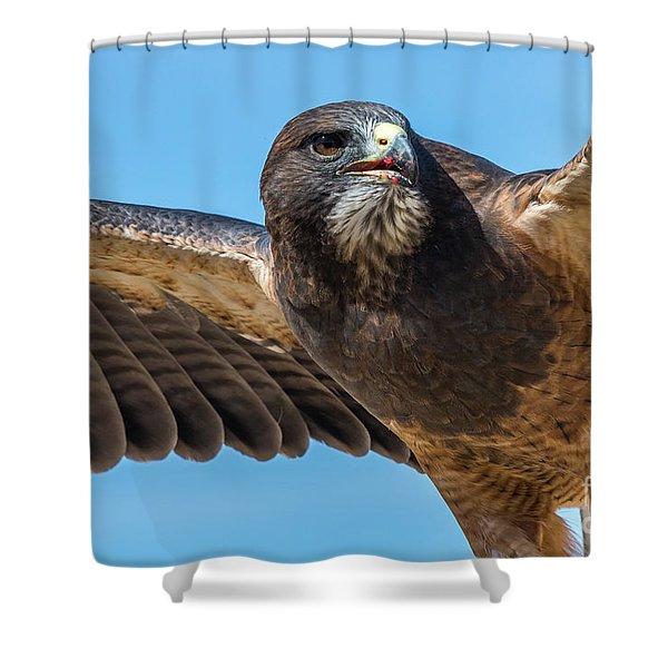 The Kill Wildlife Art By Kaylyn Franks Shower Curtain