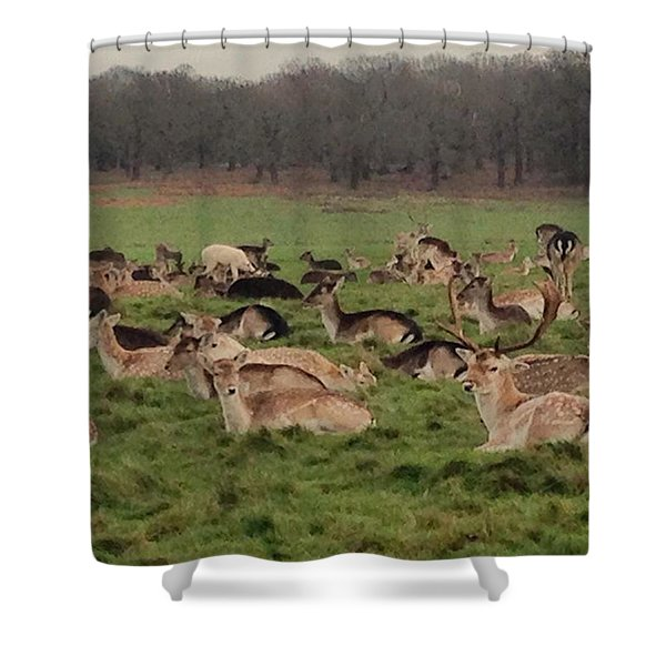 The Land Of Deers Shower Curtain