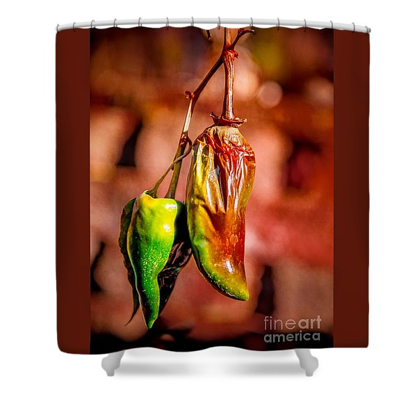 The Last Peppers Shower Curtain