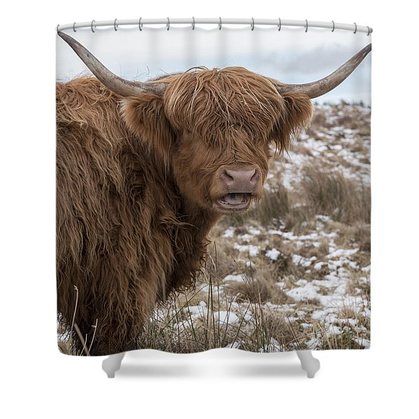 The Laughing Cow, Scottish Version Shower Curtain