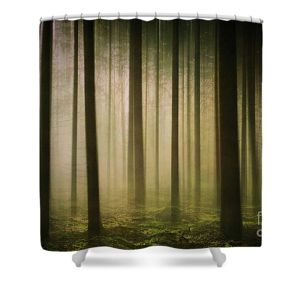 The Light In The Woods Shower Curtain