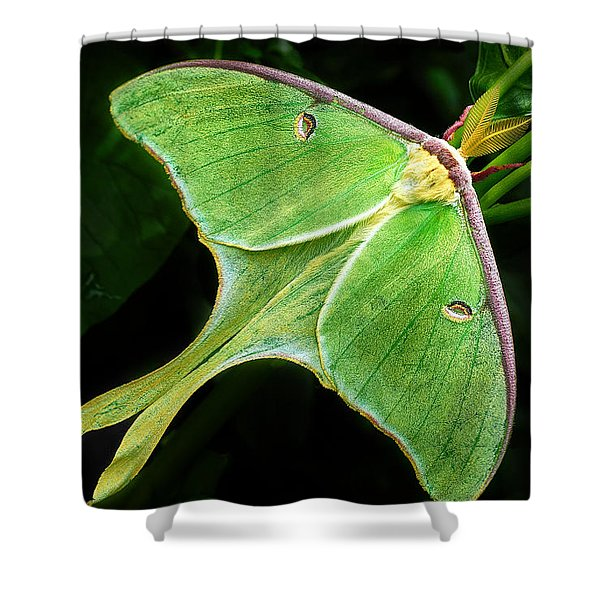 The Luna Moth Shower Curtain