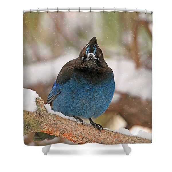 The Mad Blue Jay Shower Curtain