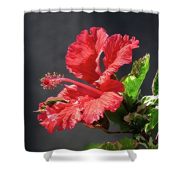 The Mallow Hibiscus Shower Curtain