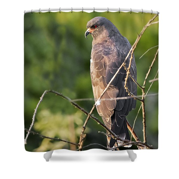 The Master Shower Curtain