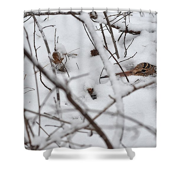The Maternal Instinct Of The American Woodcock Shower Curtain