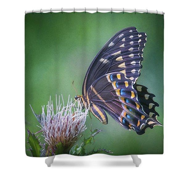 The Mattamuskeet Butterfly Shower Curtain