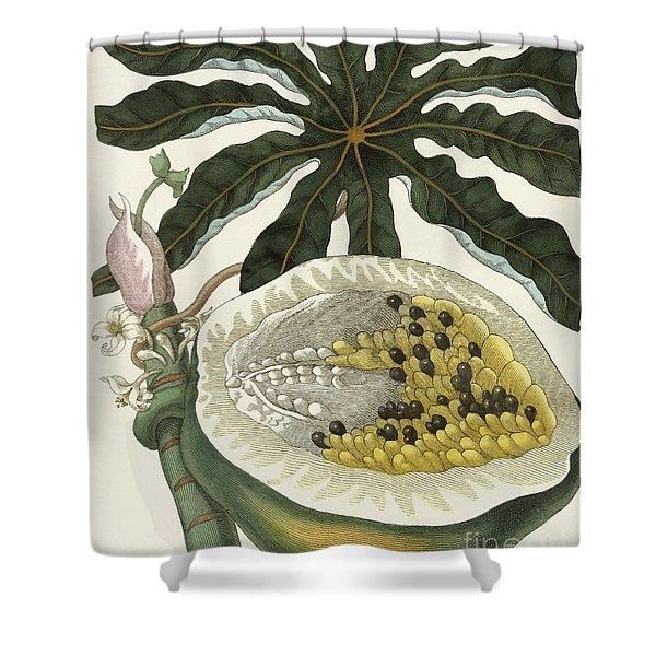 The Melon Or Papaya Tree Shower Curtain