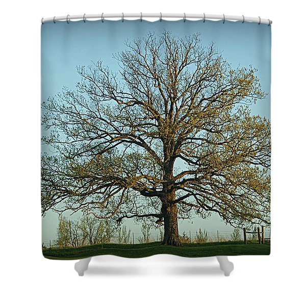 The Mighty Oak In Spring Shower Curtain