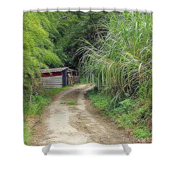 The Old Forest Road Shower Curtain