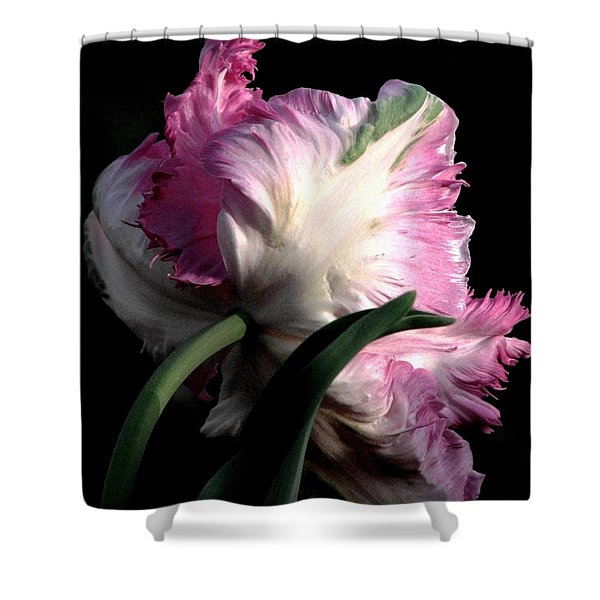 The Parrot Tulip Queen Of Spring Shower Curtain