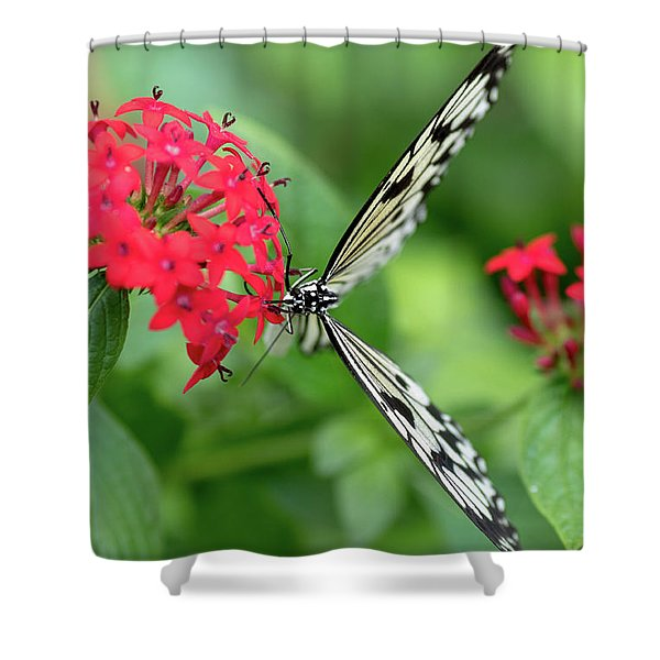 The Perfect Butterfly Land Shower Curtain