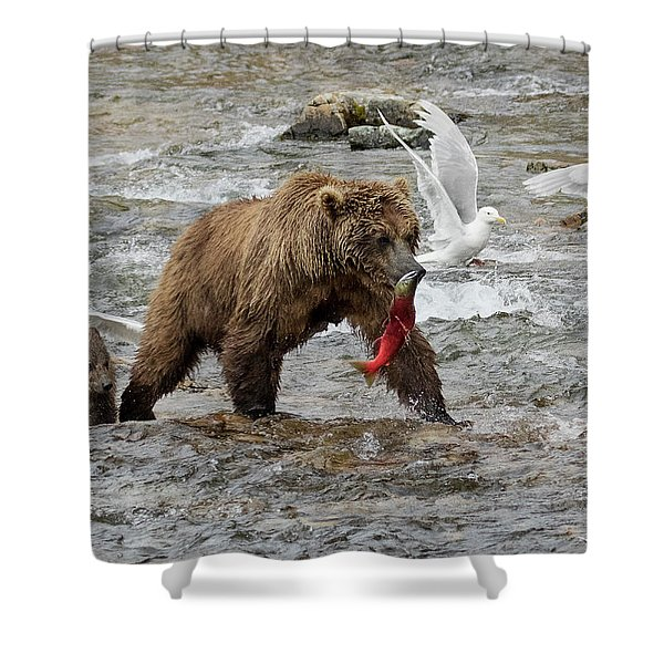 The Plight Of The Sockeye Shower Curtain