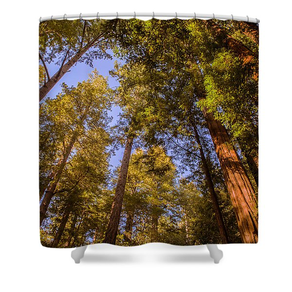 The Portola Redwood Forest Shower Curtain