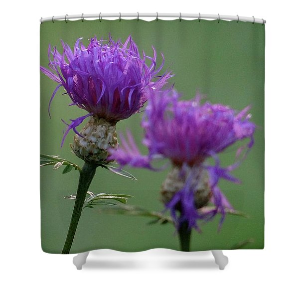 The Purple Bloom Shower Curtain