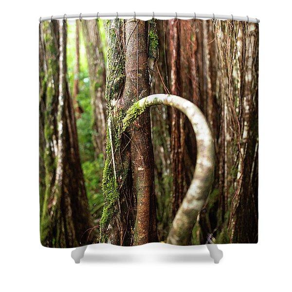 The Rainforest Shower Curtain