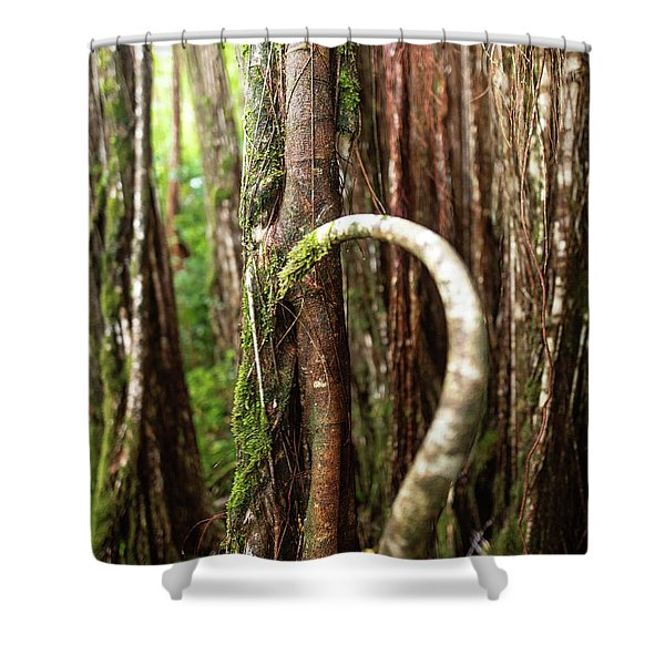 Shower Curtain featuring the photograph The Rainforest by Break The Silhouette