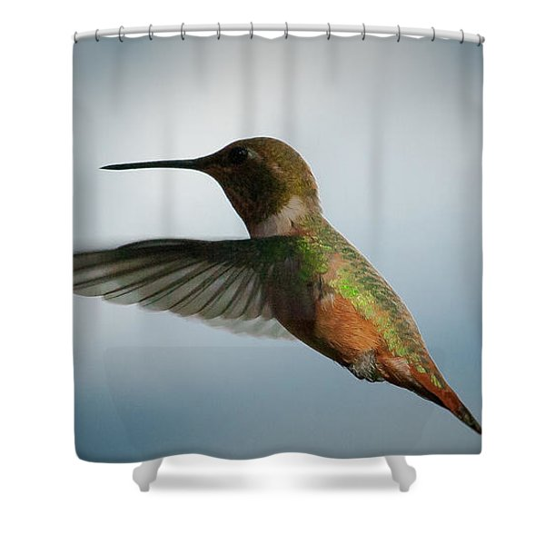 The Rare Green Backed Male Rufous Hummingbird Shower Curtain