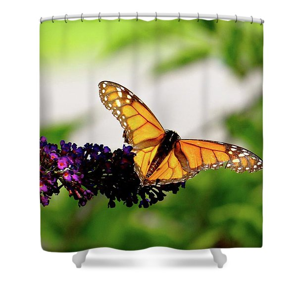 The Resting Monarch Shower Curtain