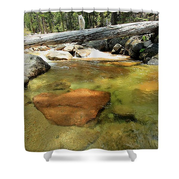 Shower Curtain featuring the photograph The Road Less Travelled  Portrait by Sean Sarsfield