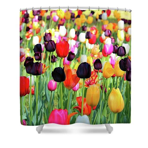 The Season Of Tulips Shower Curtain