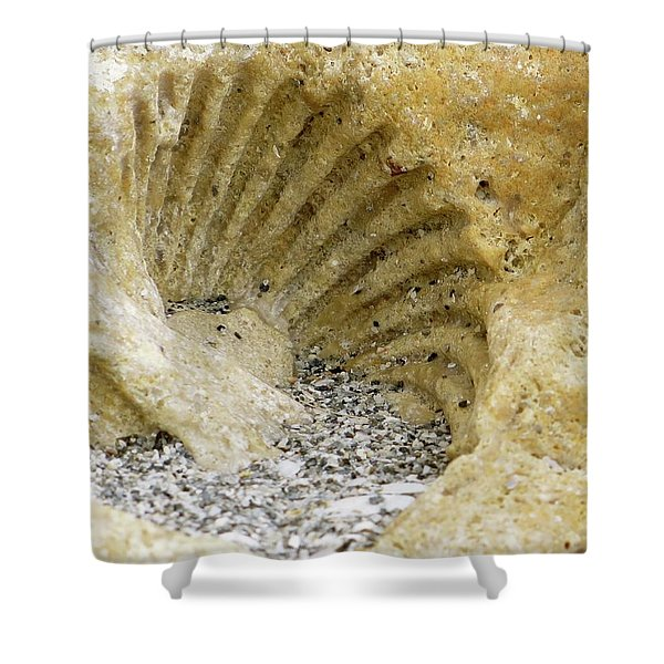 The Shell Fossil Shower Curtain