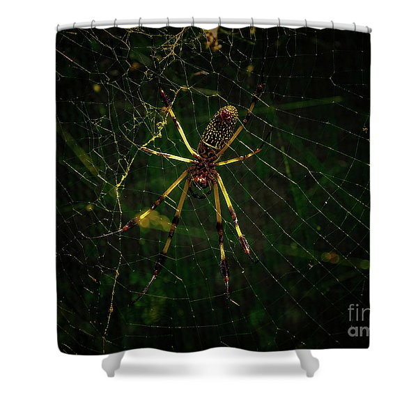 The Spider Shower Curtain